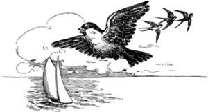 Sparrow-swallow-sailing